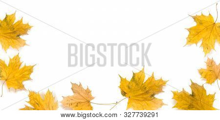 Autumn Maple Leaves Isolated On White Background With Copy Space In The Middle Of The Frame. Fall Co
