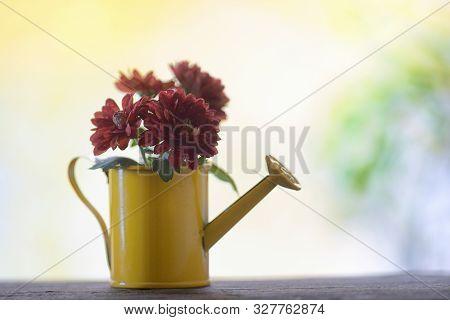 Autmn Flowers In Small Bucket At Window