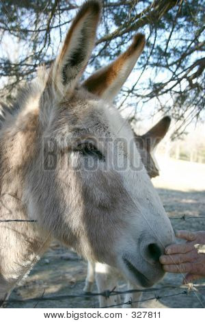 poster of burro wanting some affection