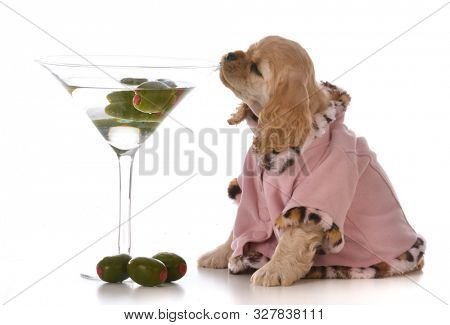 female cocker spaniel sipping on a martini on white background