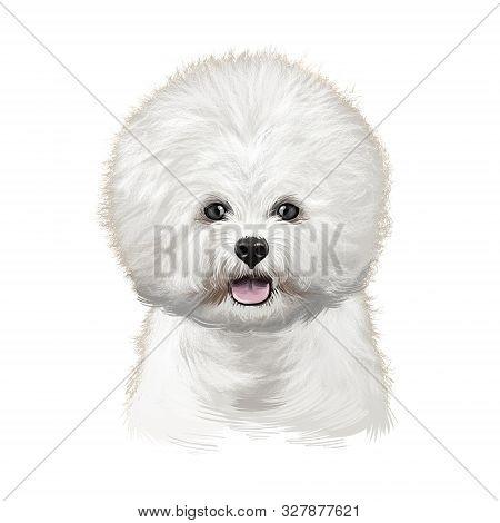 Bichon Frise, Bichon Tenerife, Bichon A Poil Frise Dog Digital Art Illustration Isolated On White Ba