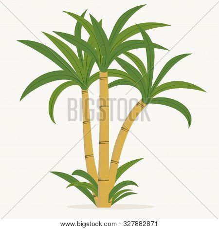 Sugar Cane. Cane Plant, Sugarcane Harvest Stalk, Plant And Leaves, Sugar Ingredient Stem. Vector