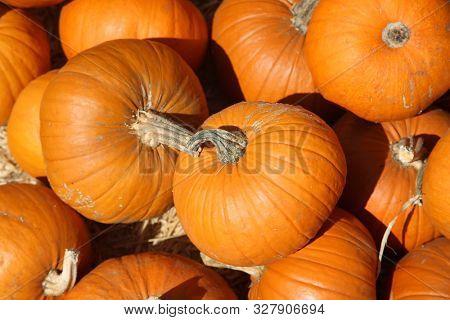 Pumpkins. Pumpkins for sale at a Pumpkin Patch. Halloween and Autumn Pumpkins piled upon each other for sale at a farmers market. Orange Pumpkins.