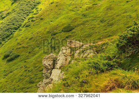 Climbing Mount Hoverla In The Carpathians, Ukraine. Natural Background. Human Protected Nature Conce