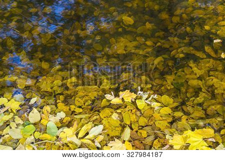 Autumn Quaking Asp Yellow Leaves In A Pond. Blue Sky Reflection In The Water. Beautiful Nature Scene