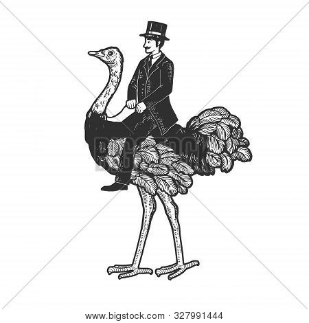 Old Fashioned Gentleman Riding An Ostrich Sketch Engraving Vector Illustration. T-shirt Apparel Prin