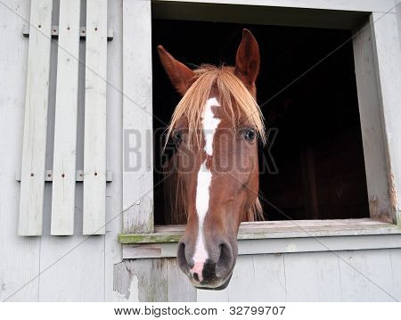 Brown Horse in Barn