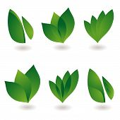 collection of six environmental leaf designs with shadow poster