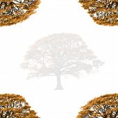 Abstract illustration of a faded autumn oak tree with branches at the four corners set against a white background. poster