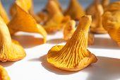 Chanterelle mushrooms closeup image. A set of eatable mushrooms poster
