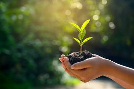 In The Hands Of Trees Growing Seedlings. Bokeh Green Background Female Hand Holding Tree On Nature F