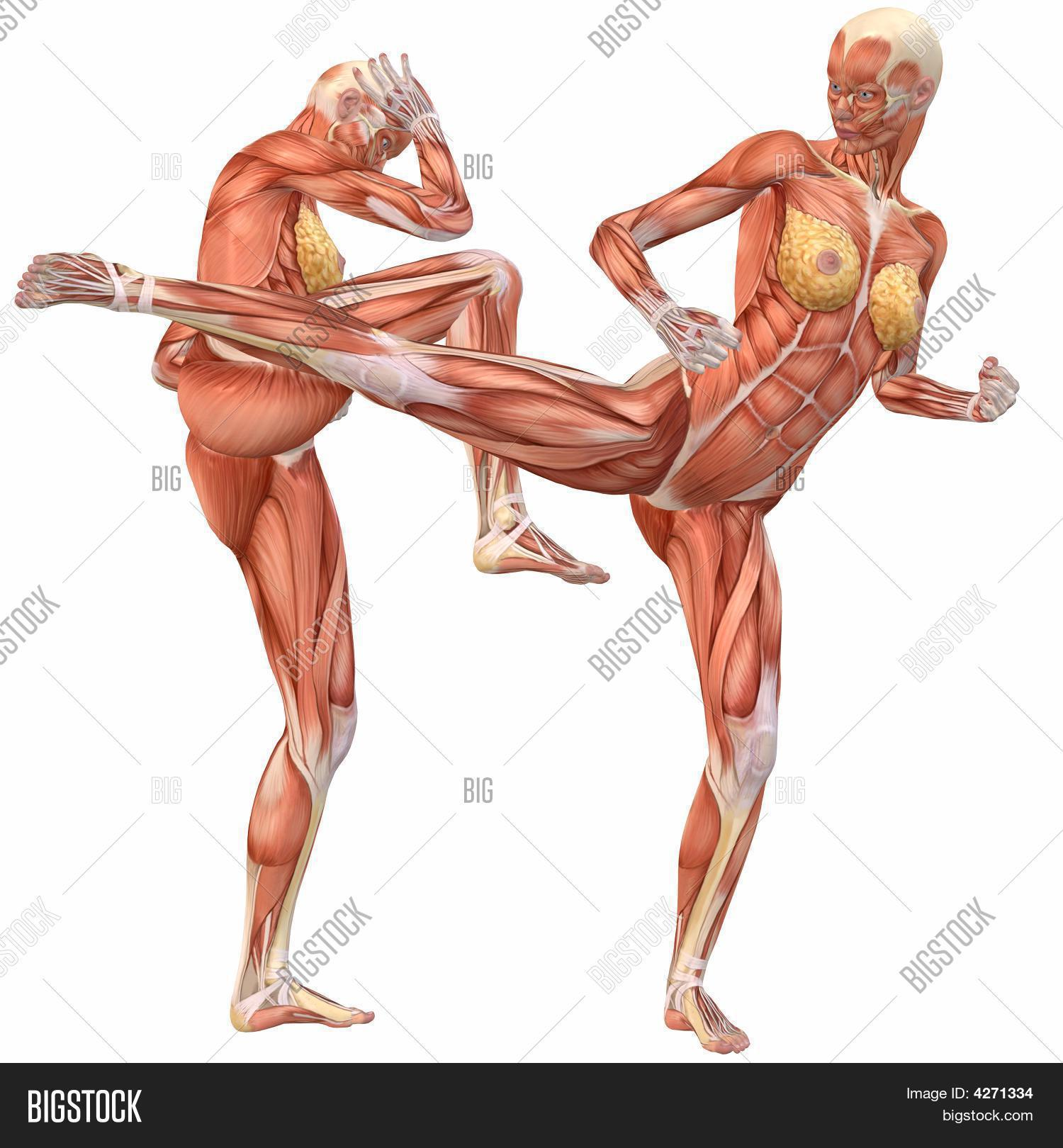 Imagen y foto Cuerpo Humano Femenino Anatomí | Bigstock