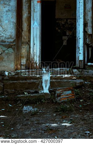 A Stray Cat Sits On The Steps Of The Stairs On The Porch Of An Old Scary Mystical Abandoned House At
