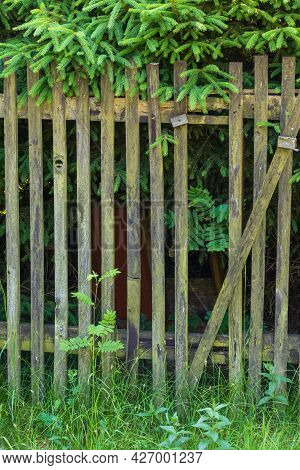 Old Wooden Fence Made Of Planks. Green Grass Grows Around The Fence.
