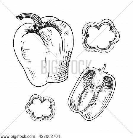 Paprika. Sweet Pepper. Hand-drawn Sketch. Vector Illustration Isolated On White.