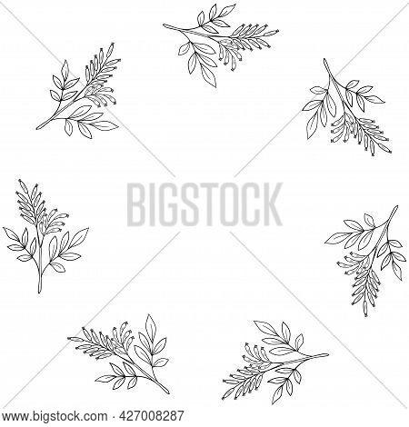 Bitter-wood, Frame, Border Dd Ww Herb Isol