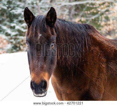 Winter Horse