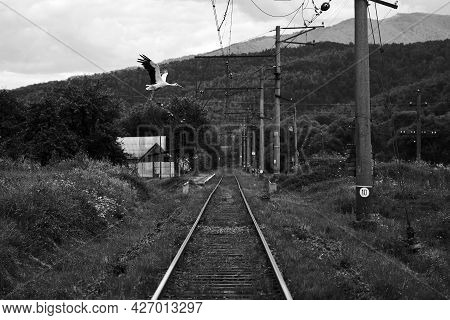 Stork Flying Over The Railway In A Small Carpathian Mountain Village. Black And White Image.