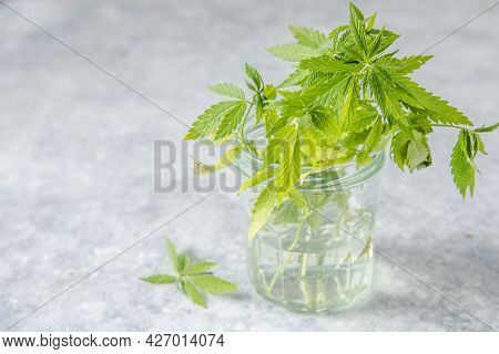 Medicinal Hemp Leaves In A Glass Dropper Bottle With Cbd Hemp. Medical Cannabis Concept. Medicinal H