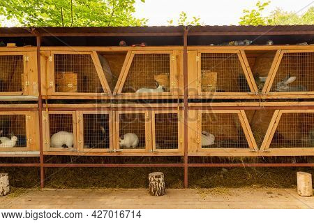 Domestic Rabbits In Cages. Content, Breeding In Captivity.