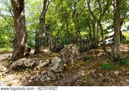 A Dense Mountainous Green Forest With Large Gray Limestone Stones.
