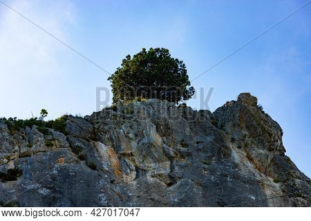 A Lone Tree On A Marbled Limestone Rock Against A Blue Sky. Scenery.