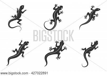 Set Of Icons Lizards, Chameleons, Geckos Logo Or Icon Vector Design Template Isolated On White Backg