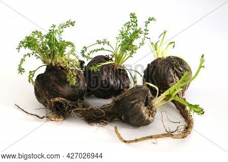 Maca. Peruvian Root For Vitality, Energy And Healty. Black Peruvian Maca In White Background. Root A