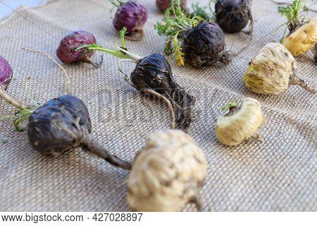 Fresh Maca Roots Or Peruvian Ginseng