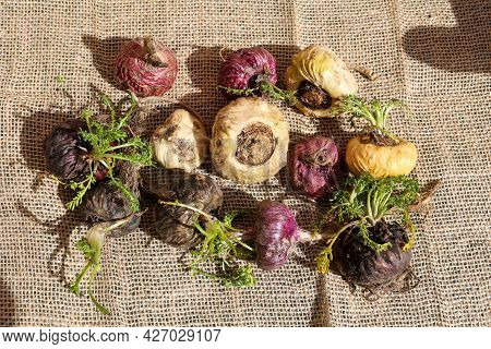 Various Types Of Peruvian Maca On A Rustic Background