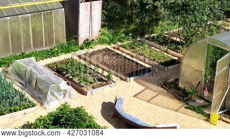 Gardens With Vegetables At Their Summer Cottage. Vegetable Plantings And Greenhouses In The Vegetabl