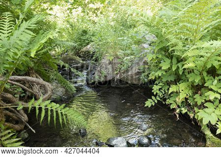 Beautiful Creek With Rich Green Flora In Forest