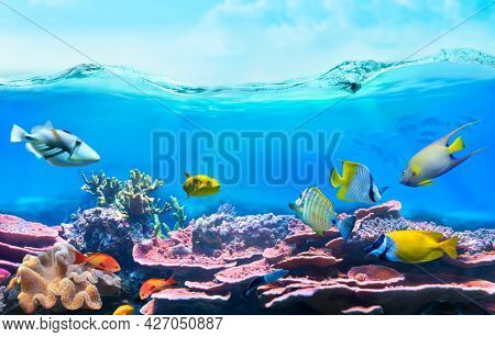 Colorful tropical fish in shallow coastal waters. Life in a coral reef - rabbitfish. Animals of the underwater sea world. Ecosystem.