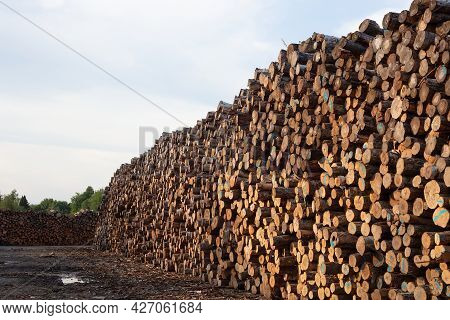 Forestry Logs Stacked Raw Wood Forest Cut Industry