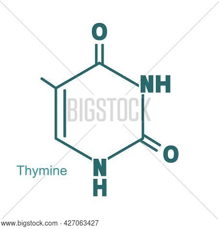 Chemical Structural Formula Of Thymine - Dna And Rna Nitrogen Base