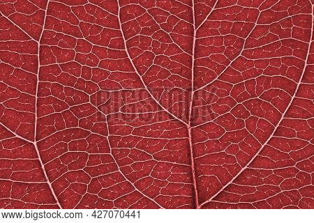Leaf Of Fruit Tree Close-up. Red Tinted Mosaic Pattern Of A Net Of Veins And Plant Cells. Abstract M