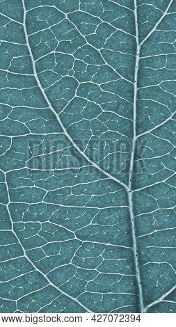 Leaf Of Fruit Tree Close-up. Light Gray Tinted Mosaic Pattern Of A Net Of Veins And Plant Cells. Flo