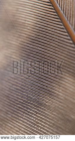 Bird Of Prey Feather. Light Brown Mobile Phone Wallpaper. Natural Narrow Background Or Backdrop With