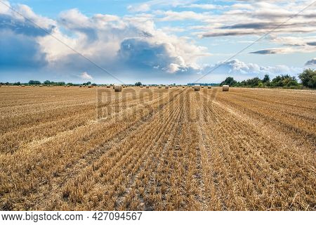 Field Of Beveled Wheat Against The Background Of Cloudy Sky