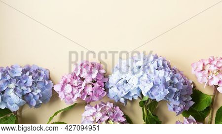 Hydrangea Flower Top View Mockup. Beauty, Feminine Abstract Floral Background. Copy Space For Text.