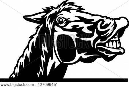 Peeking Horse - Funny Farm Animals Peeking Out - Face Head Isolated On White