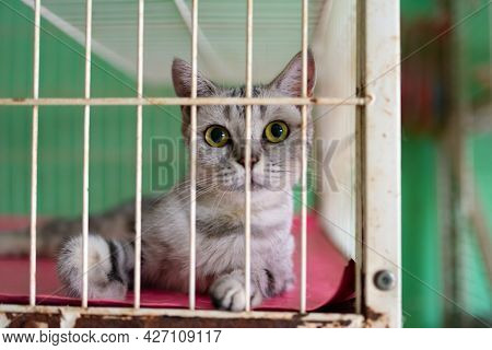 A Cute Cat With Big Eyes Looking At The Camera In A Cage