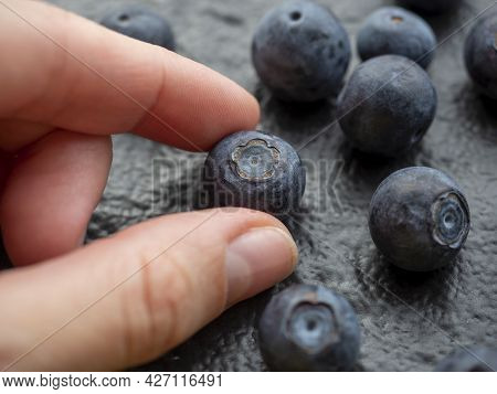 Blueberry Berry In The Fingers Of A Woman's Hand. Textured Black Background. Close-up, Selective Foc