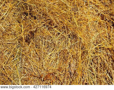 Close-up Of The Collected Yellow Hay. Texture, Background. Animal Feed