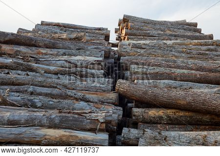 Wood Heap Timber Yard Forestry Industry Rough Cut Trees