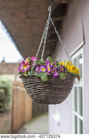 Multicolored Primrose In A Wicker Willow Basket, Hung For Decoration At The Entrance To An Old Engli