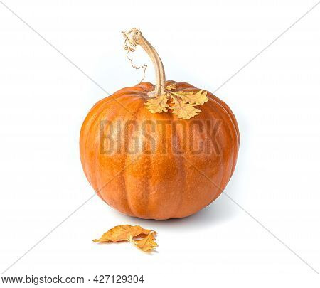 Pumpkin With Autumn Leaves Isolated On A White Background. Side View. The Concept Of Thanksgiving, H