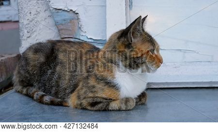 Tabby And White Beautiful Kitten Sitting On Still Surface Near The Wall Of Abandoned House Outdoor