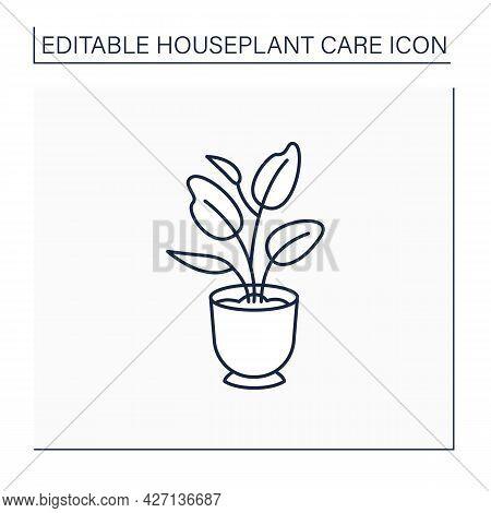Ficus Elastica Line Icon. Home Gardening.perennial Evergreen Plant-xerophyte. Beautiful Home Plant I