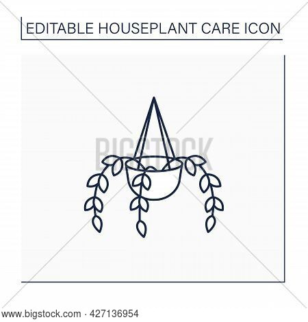 Epipremnum Line Icon. Home Gardening. Tropical Plant Interior Decor. Beautiful Home Plant In Hanging